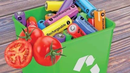 Atık pillerle domates yetiştiriliyor