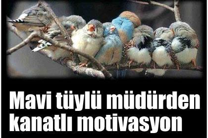 Mavi+t%C3%BCyl%C3%BC+m%C3%BCd%C3%BCrden+kanatl%C4%B1+motivasyon